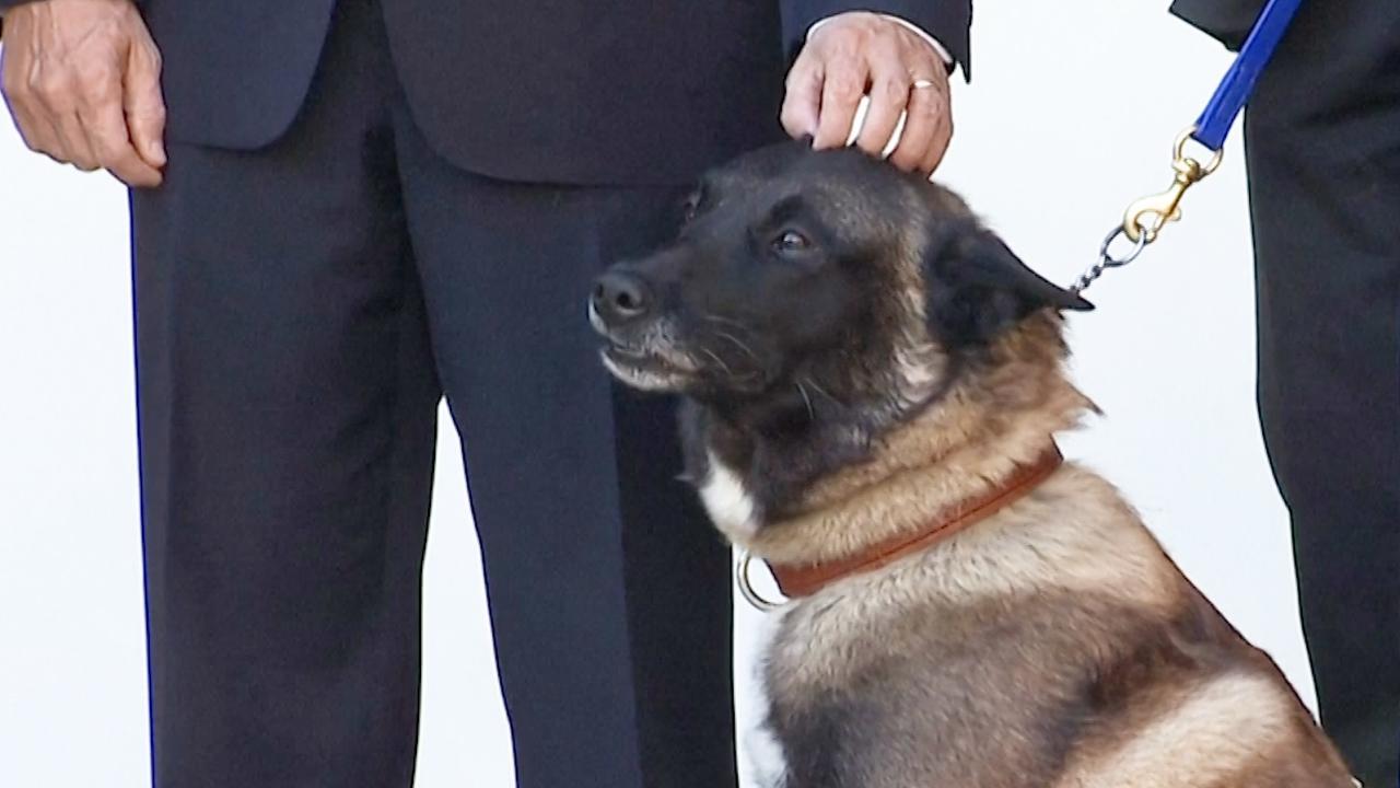 'Nederlandse' hond als held onthaald in Witte Huis