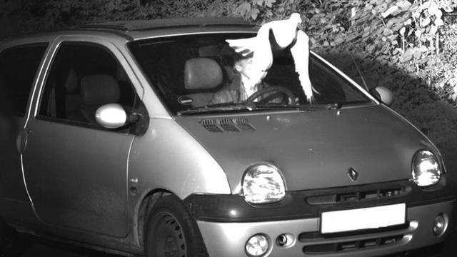 Duitse chauffeur krijgt geen snelheidsboete dankzij passerende duif