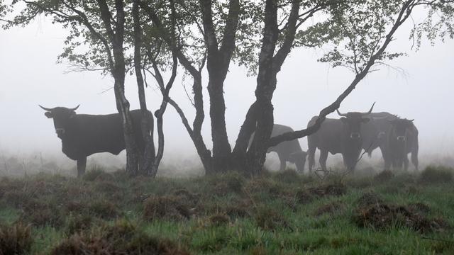 Weerbericht: Opnieuw mistbanken in het noorden van het land