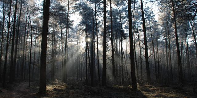 Verwachte drukte in Bredase natuurgebieden bleef tijdens Kerst uit