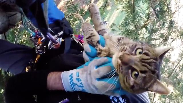 Minidocu: Amerikanen redden katten uit heel hoge bomen