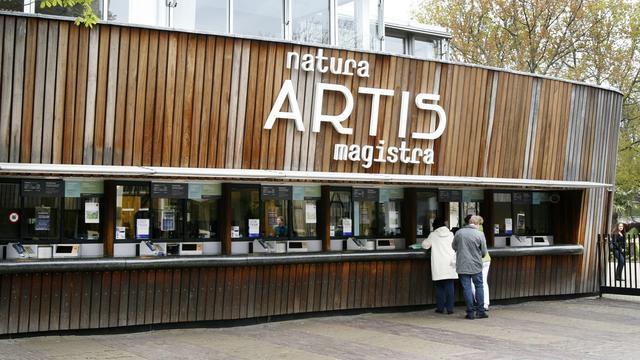 Zuid-Amerikaanse papierwesp als verstekeling naar Artis gebracht