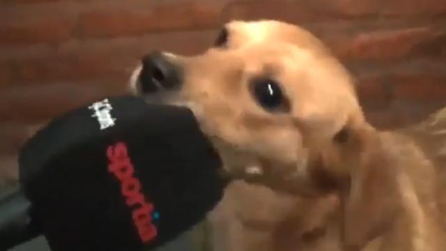 Vrolijke hond verstoort Argentijnse voetbalwedstrijd
