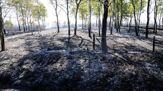 Natuurbrand in Deurnese Peel grootste in Nederland ooit: 800 hectare in de as