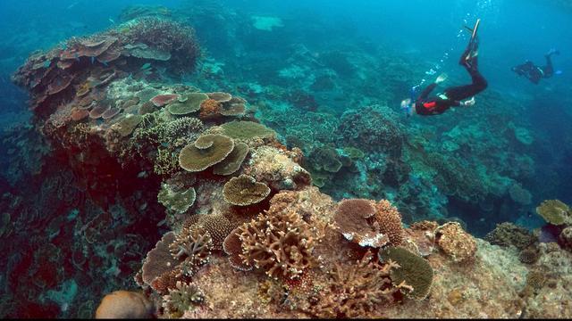 Enorm 'vlot' vulkanisch gesteente kan wellicht Great Barrier Reef redden