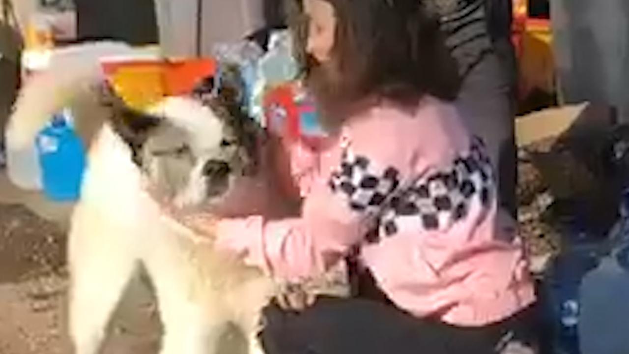 Vermiste hond na 101 dagen herenigd met familie