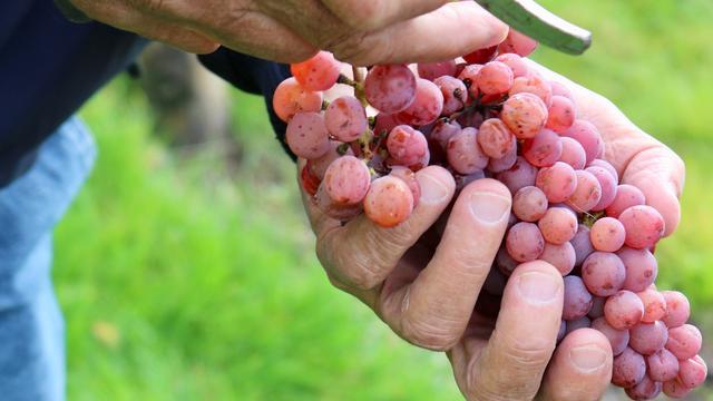 Op wijnreis in de Achterhoek: de Bourgogne van Nederland
