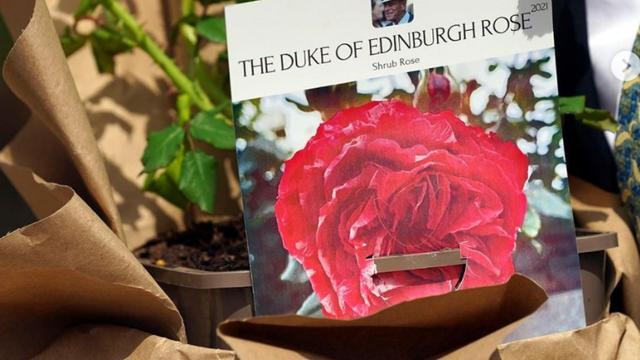De roos die naar prins Philip is vernoemd.