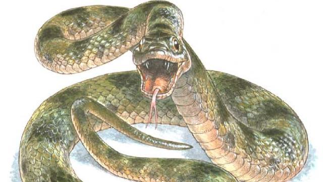 Huidskleuren van prehistorische slang gereconstrueerd