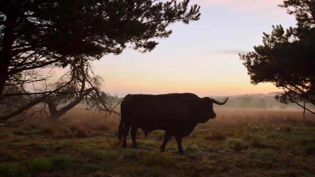 Landbouw kan een stuk duurzamer, maar hoe?