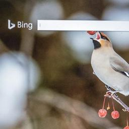 Zoekmachines Bing en Yahoo toonden racistische zoeksuggesties