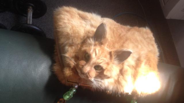 Handtas gemaakt van een aangereden kat geveild in Nieuw-Zeeland