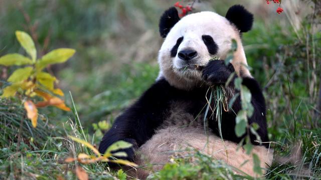 WWF-rapport: Omvang dierenpopulaties in halve eeuw twee derde gedaald