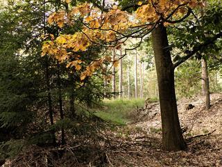Bosjes hebben de grootte van een tennisbaan