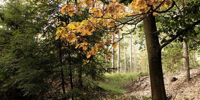 Volle lijnbus rijdt zonder chauffeur Duits bos in