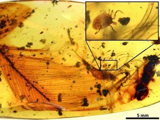 Klonen van dino's uit muggenbloed met huidige technieken niet mogelijk