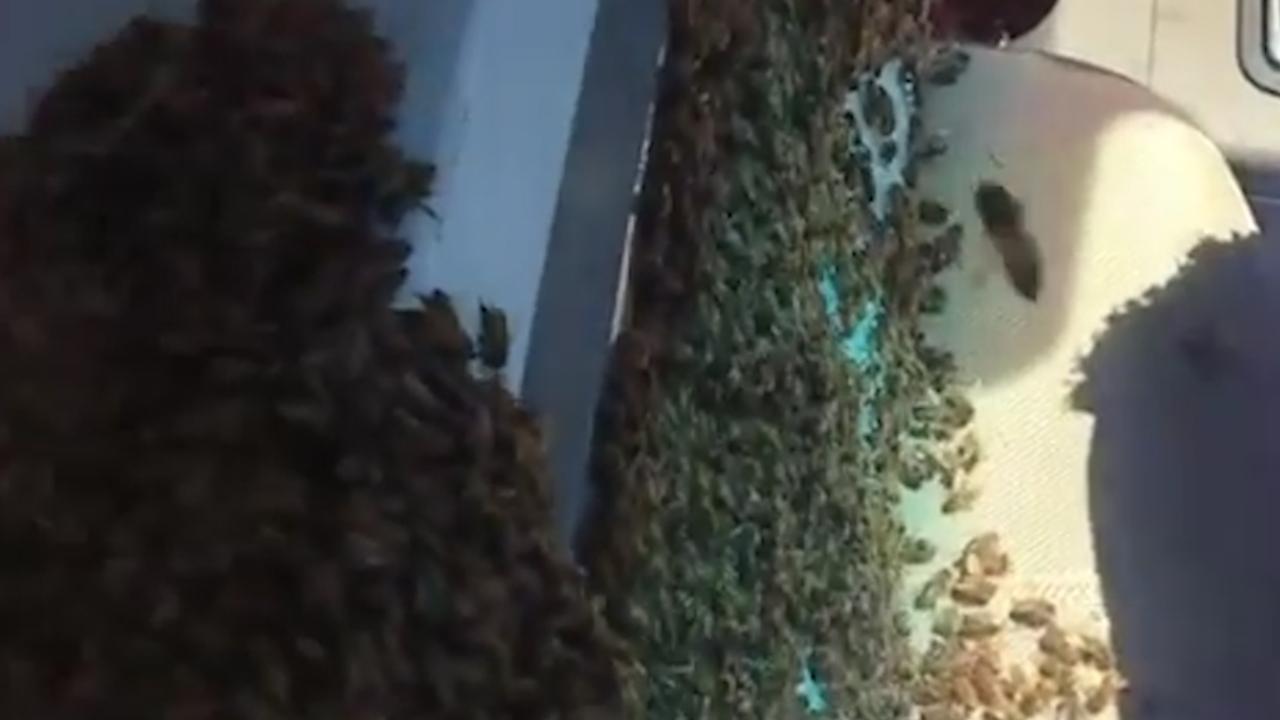 Imker VS rijdt 65 kilometer met duizenden bijen in zijn auto