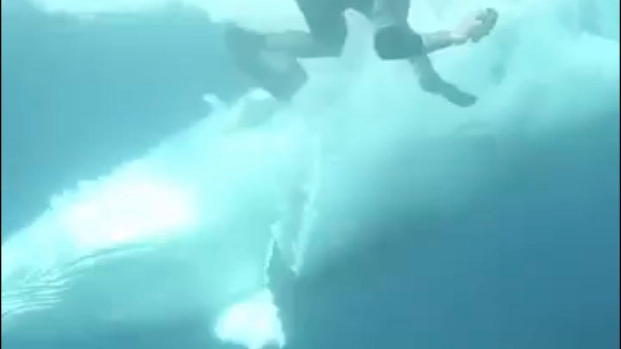 Springende walvis verplettert bijna snorkelaar voor de Australische kust