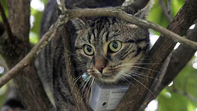 Boomexpert redt kat na vier dagen uit reuzenkastanje in Winschoten