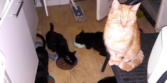 Dierenbescherming haalt 58 katten uit vervuilde woning in Katwijk