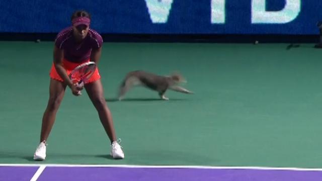Kat verstoort partij Stephens bij WTA-toernooi Moskou