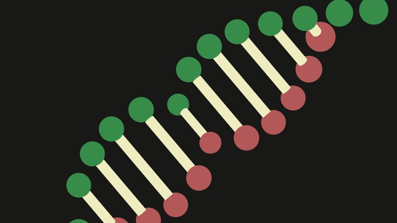 Zo werkt een DNA-verwantschapsonderzoek
