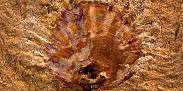 Paleontologen vinden oudste fossiel van parasiet op gastdier