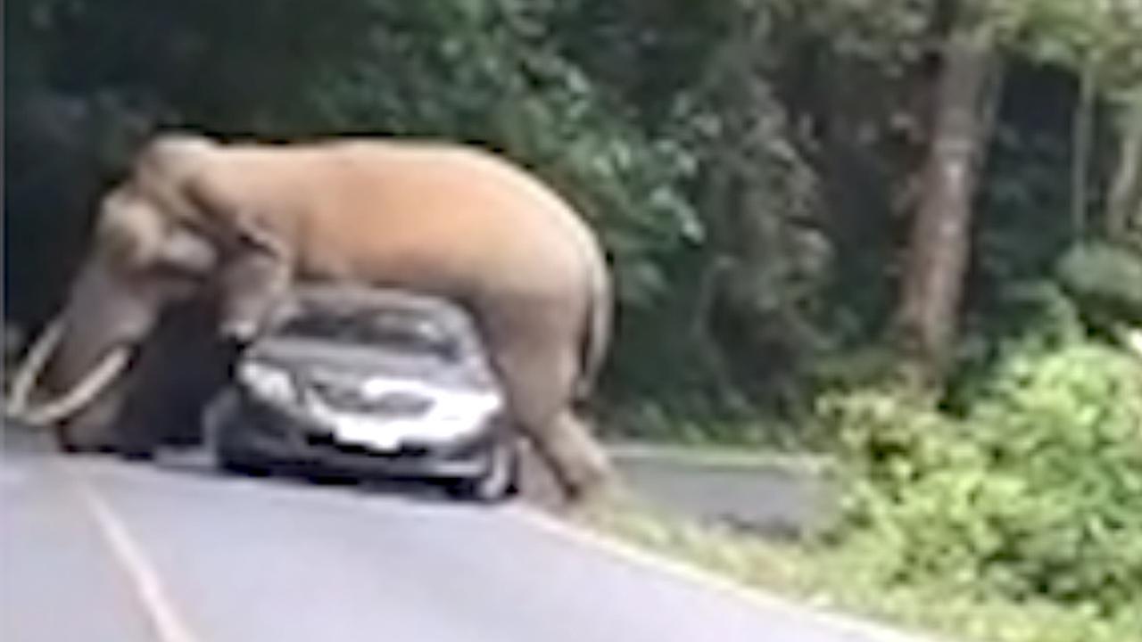 Olifant plet achterkant van auto in Thailand