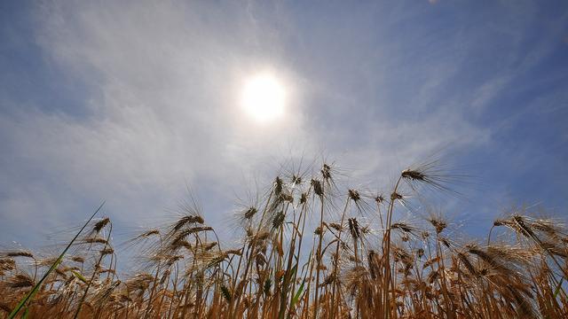 Warmste maand juni ooit gemeten in Nederland