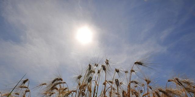 Weerbericht: Eerst wat mist, later zonnige en warme dag