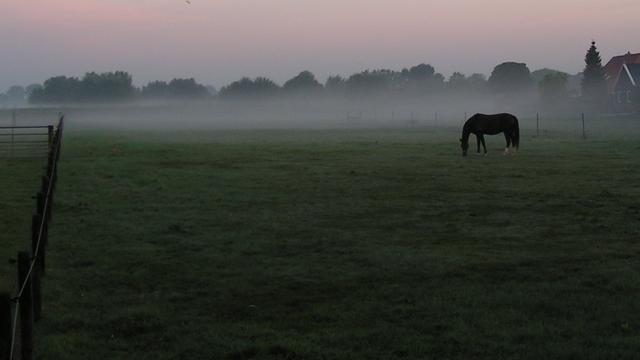 KNMI waarschuwt zondagochtend voor mist en gladheid