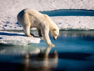 Zee-ijs groeide gemiddeld 5.100 vierkante km per dag