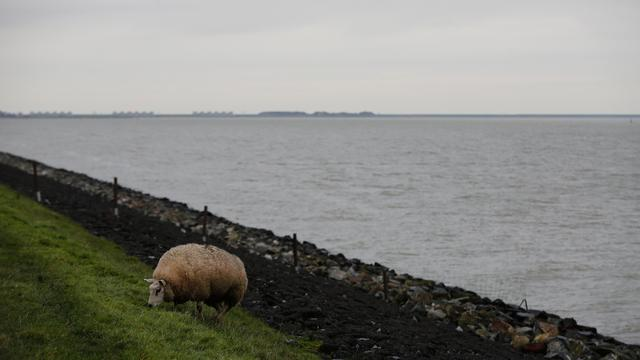 Van Oord en Boskalis versterken Houtribdijk