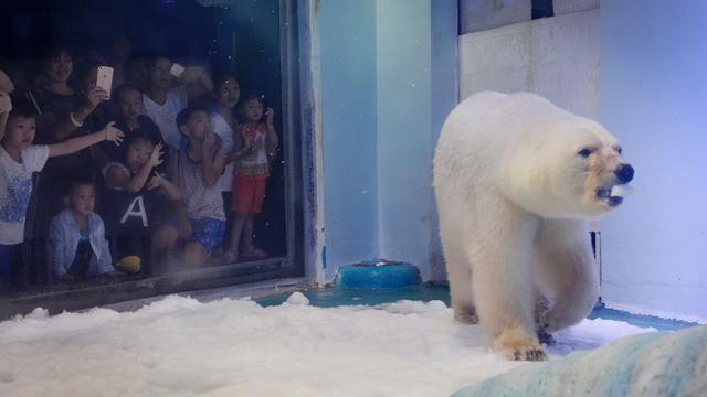 'Ongelukkige' ijsbeer uit Chinees winkelcentrum tijdelijk verplaatst