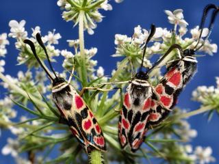 Teruggang van aantal insecten blijkt veel groter dan gedacht