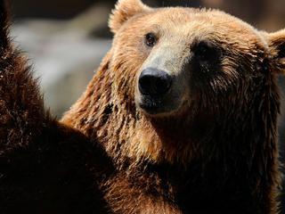 De berenmarktindicator van Goldman Sachs bevindt zich op een zeldzaam hoog niveau