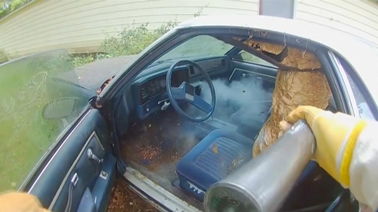 Amerikaan verwijdert enorm hoornaarsnest uit auto