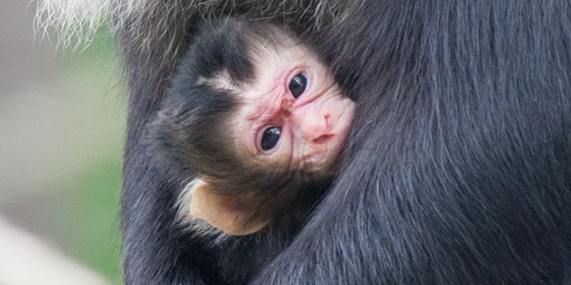 Goed nieuws: Rotterdamse campus op Minecraft | Zeldzame makaak geboren