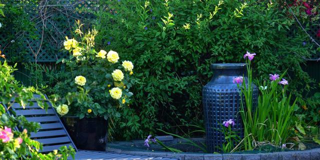 Een koele tuin in de zomer: zo doe je dat