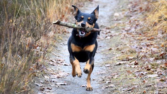 Vierduizend handtekeningen tegen hondenbelasting in Ten Boer en Haren