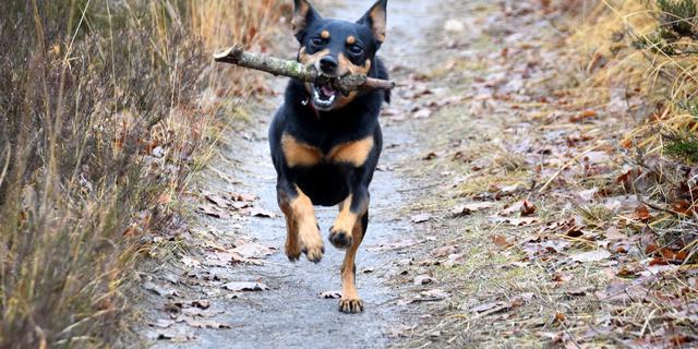 Gemeenteraad wil dit jaar nog hondenspeelveldje in Zoeterwoude