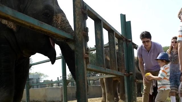 Canadese premier Trudeau en gezin bezoeken olifantenopvang in India