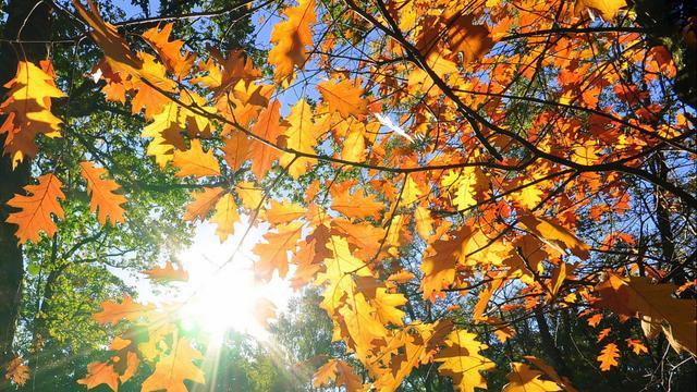 Weerbericht: Droge en zonnige herfstdag