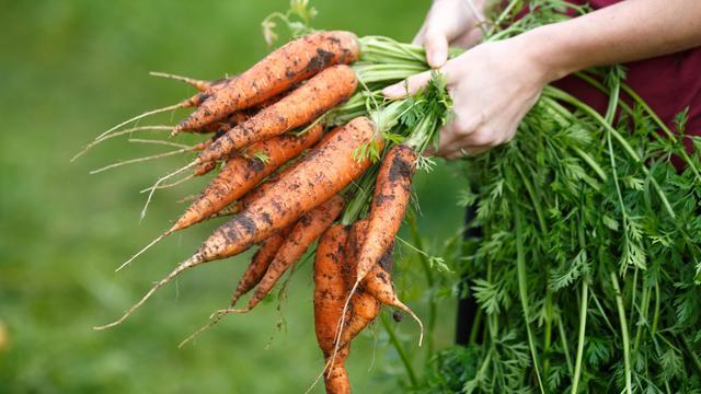Waarom wortels echt goed zijn voor je ogen