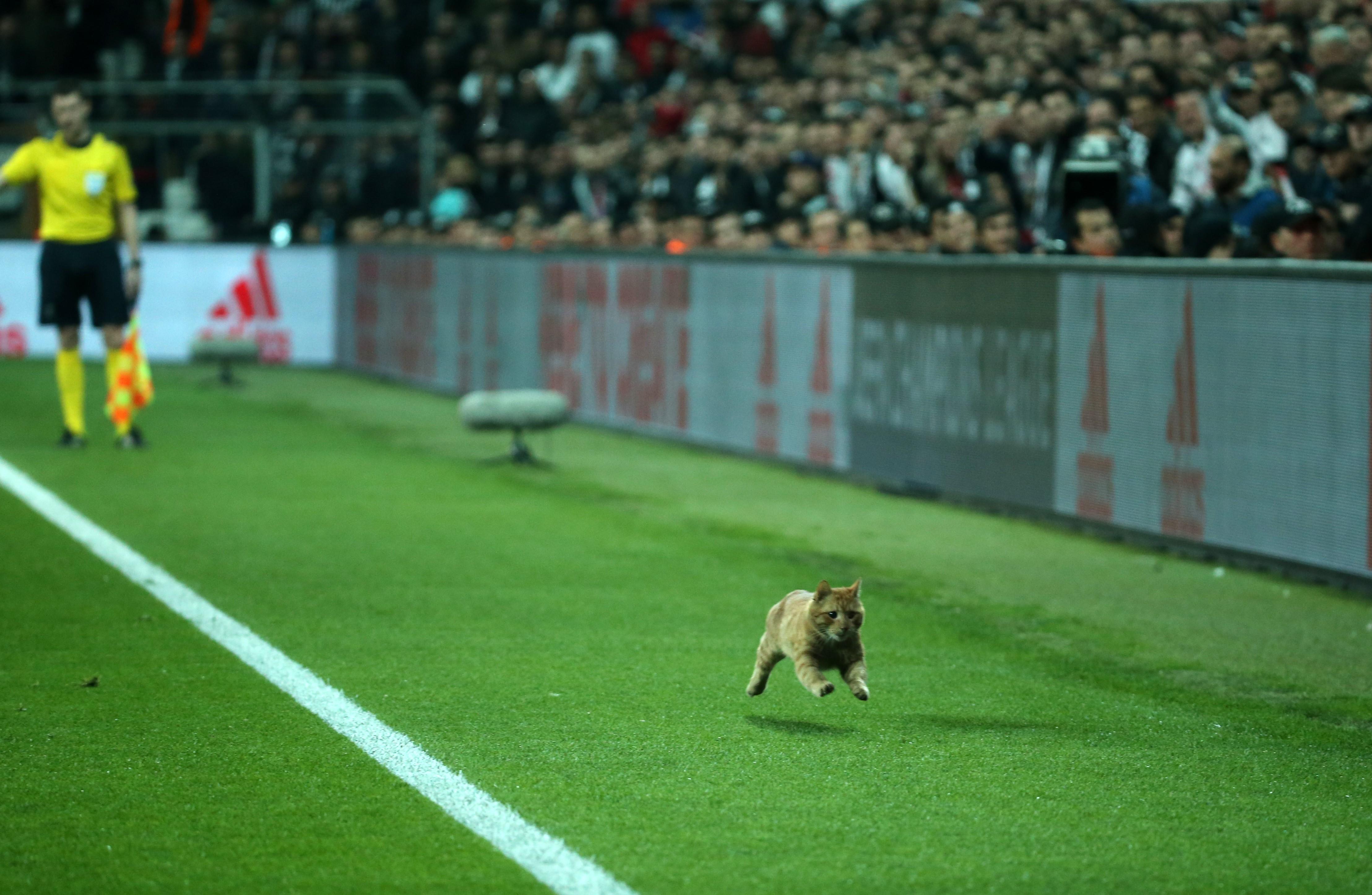 UEFA klaagt Besiktas aan wegens kat op veld tijdens duel met Bayern