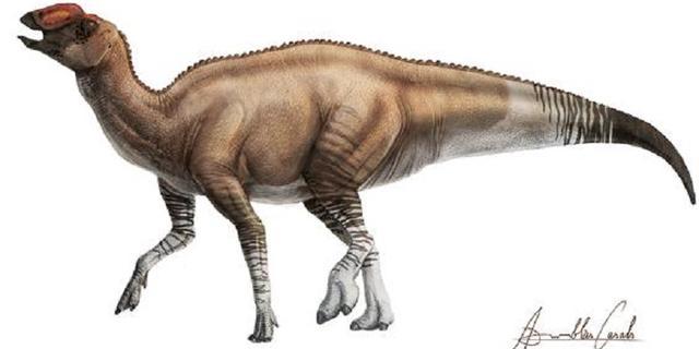 Nieuwe dinosaurussoort met eendenbek ontdekt in Texaans stuk rots