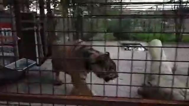 Geredde tijgers uit Aleppo aangekomen in Fries opvangcentrum