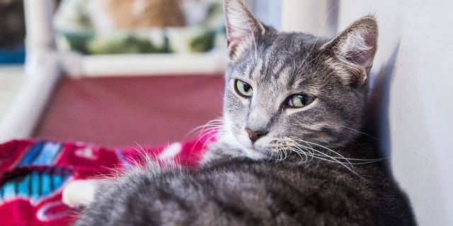 Verzekeraar: Aantal huisdierenverzekeringen met 55 procent gestegen
