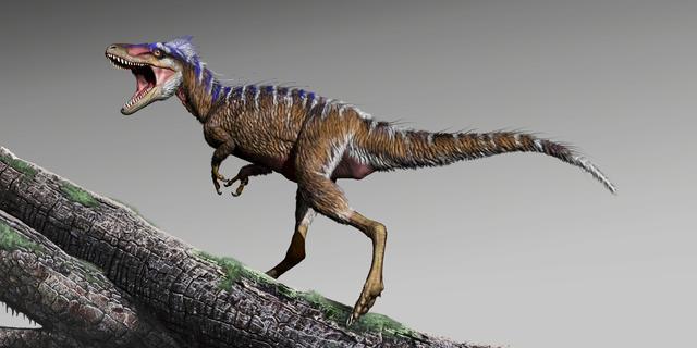 Paleontologen vinden mogelijk 'ontbrekende schakel' in evolutie T. rex