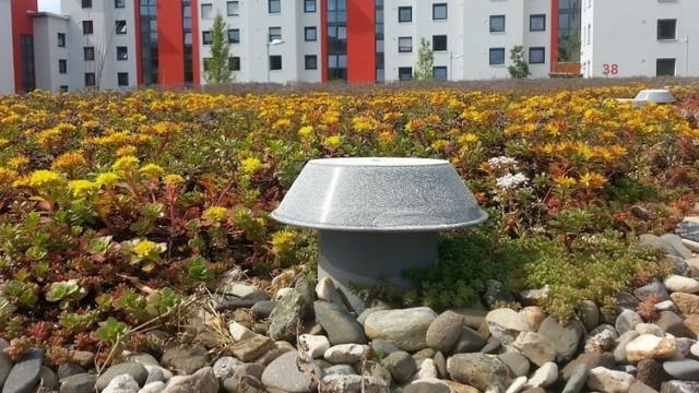 Acht bushokjes in Goes worden voorzien van groen dak